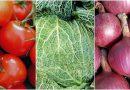 Schluss mit Vorurteilen –  Muskelaufbau für Vegetarier & Veganer