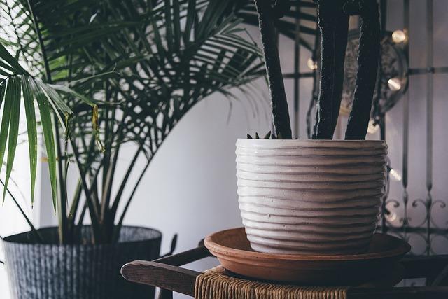 raumklima zimmerpflanzen
