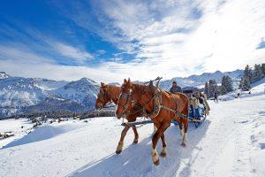 pferdeschlitten winterurlaub