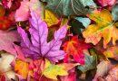 Zuhause ist es doch am Schönsten – Herbstdeko 2020